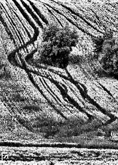 Homage to Mario Giacomelli